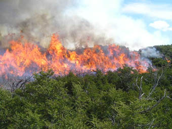 incendio_forestal_web